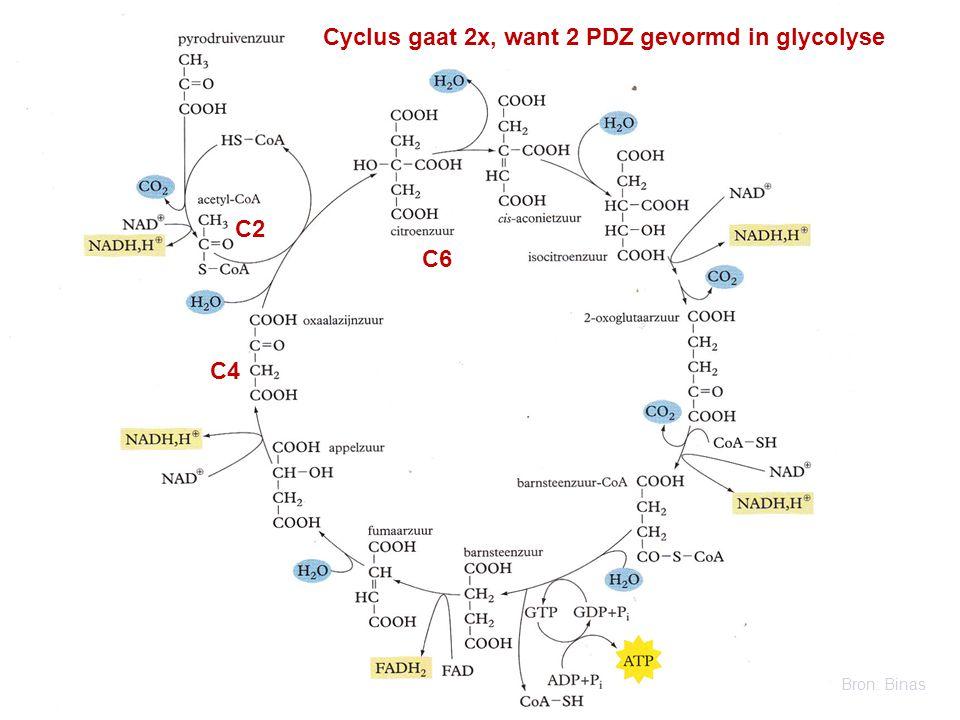 Cyclus gaat 2x, want 2 PDZ gevormd in glycolyse