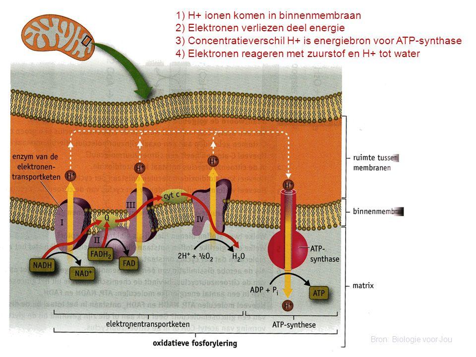 1) H+ ionen komen in binnenmembraan