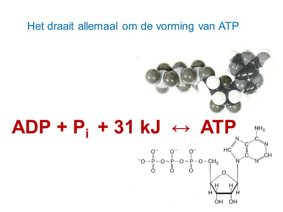 Het draait allemaal om de vorming van ATP