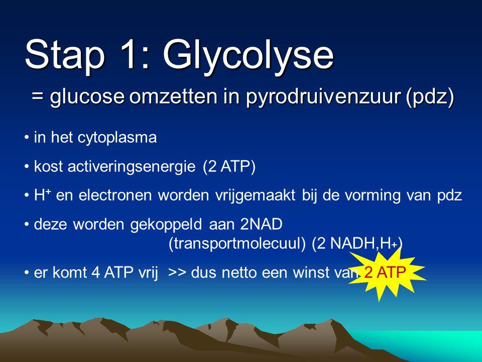 Stap 1: Glycolyse = glucose omzetten in pyrodruivenzuur (pdz)