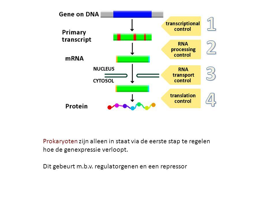 1 2. 3. 4. Prokaryoten zijn alleen in staat via de eerste stap te regelen hoe de genexpressie verloopt.