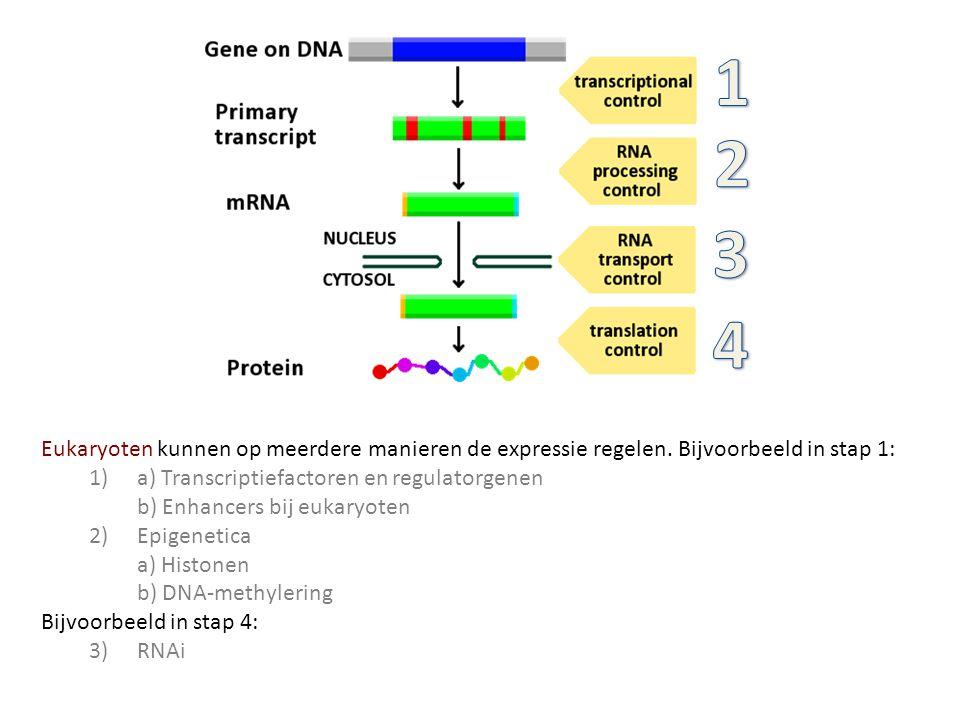 1 2. 3. 4. Eukaryoten kunnen op meerdere manieren de expressie regelen. Bijvoorbeeld in stap 1: 1) a) Transcriptiefactoren en regulatorgenen.
