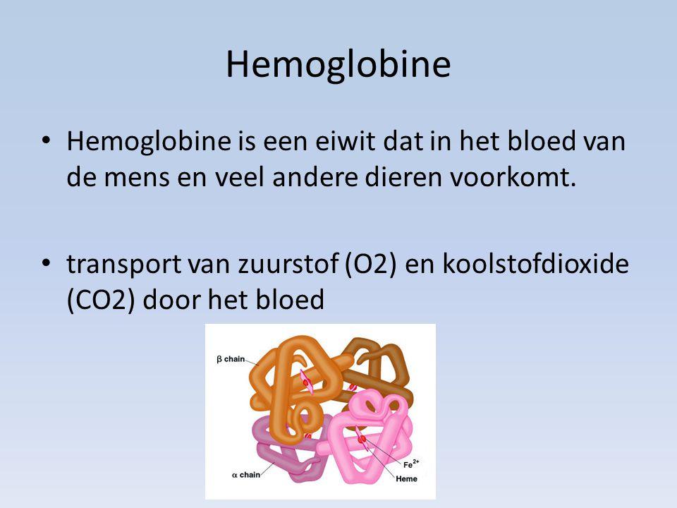 Hemoglobine Hemoglobine is een eiwit dat in het bloed van de mens en veel andere dieren voorkomt.