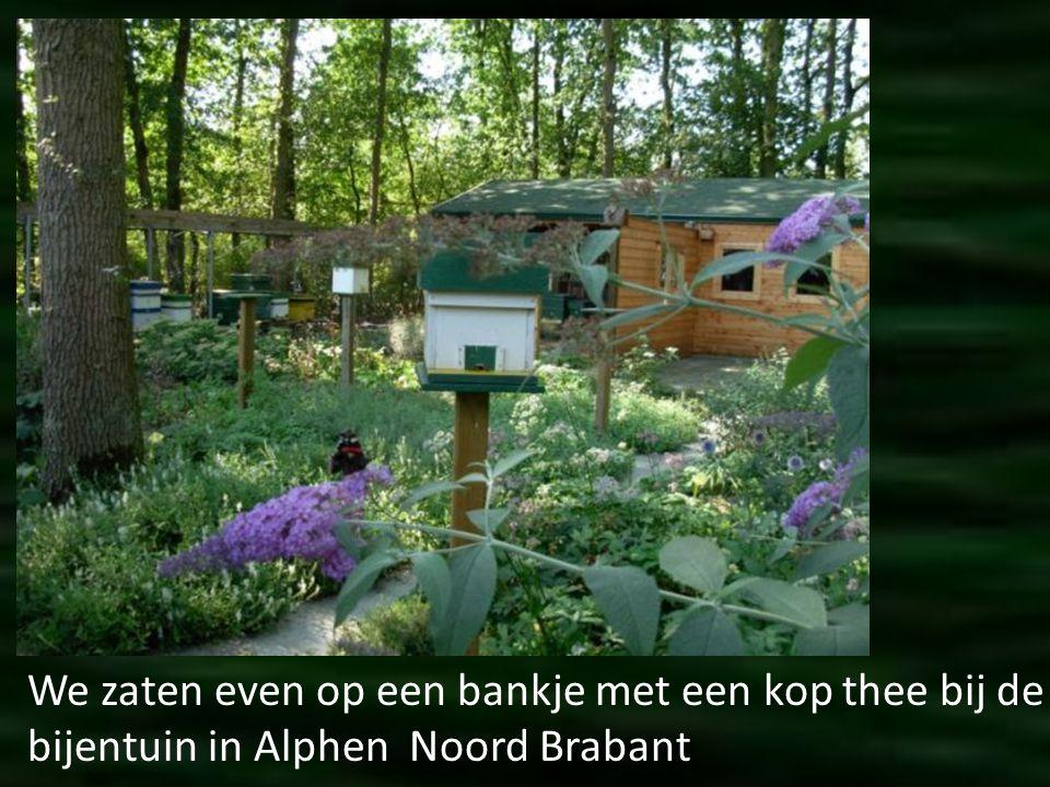 We zaten even op een bankje met een kop thee bij de bijentuin in Alphen Noord Brabant