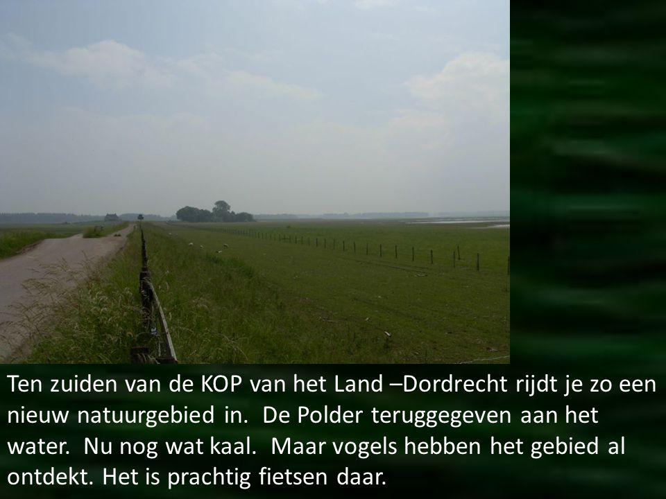 Ten zuiden van de KOP van het Land –Dordrecht rijdt je zo een nieuw natuurgebied in.