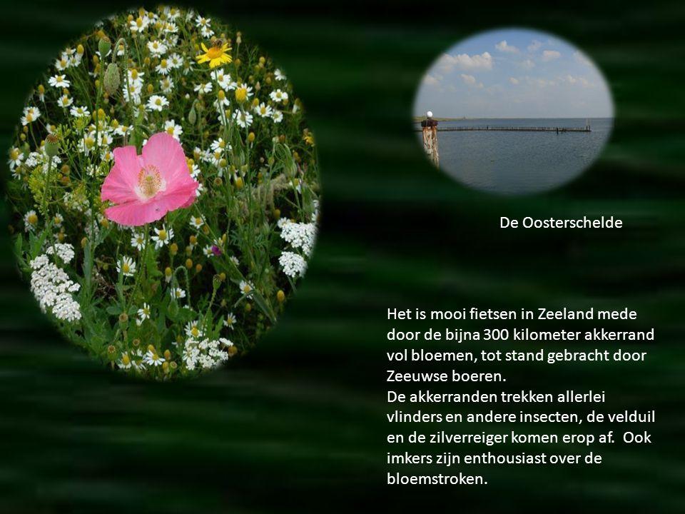De Oosterschelde Het is mooi fietsen in Zeeland mede door de bijna 300 kilometer akkerrand vol bloemen, tot stand gebracht door Zeeuwse boeren.