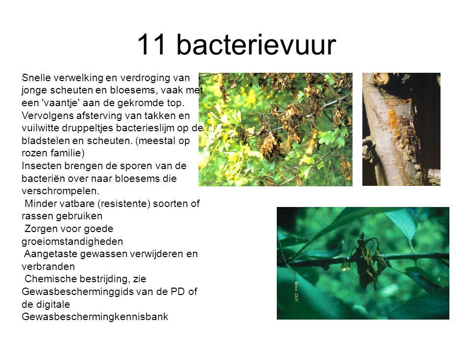 11 bacterievuur