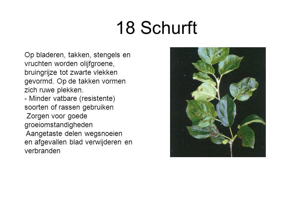 18 Schurft
