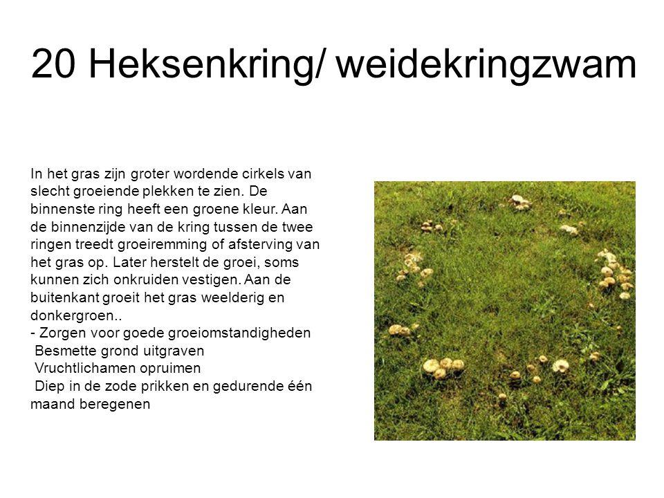 20 Heksenkring/ weidekringzwam