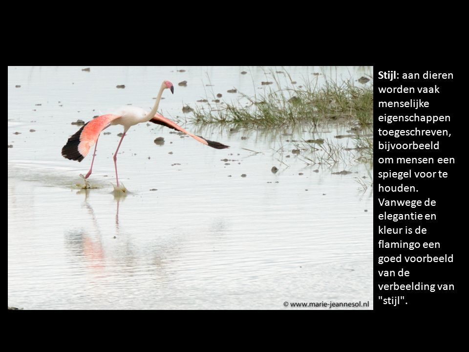 Stijl: aan dieren worden vaak menselijke eigenschappen toegeschreven, bijvoorbeeld om mensen een spiegel voor te houden.