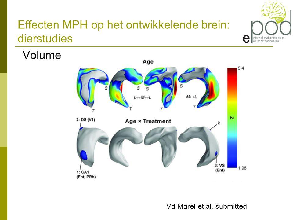 Effecten MPH op het ontwikkelende brein: dierstudies