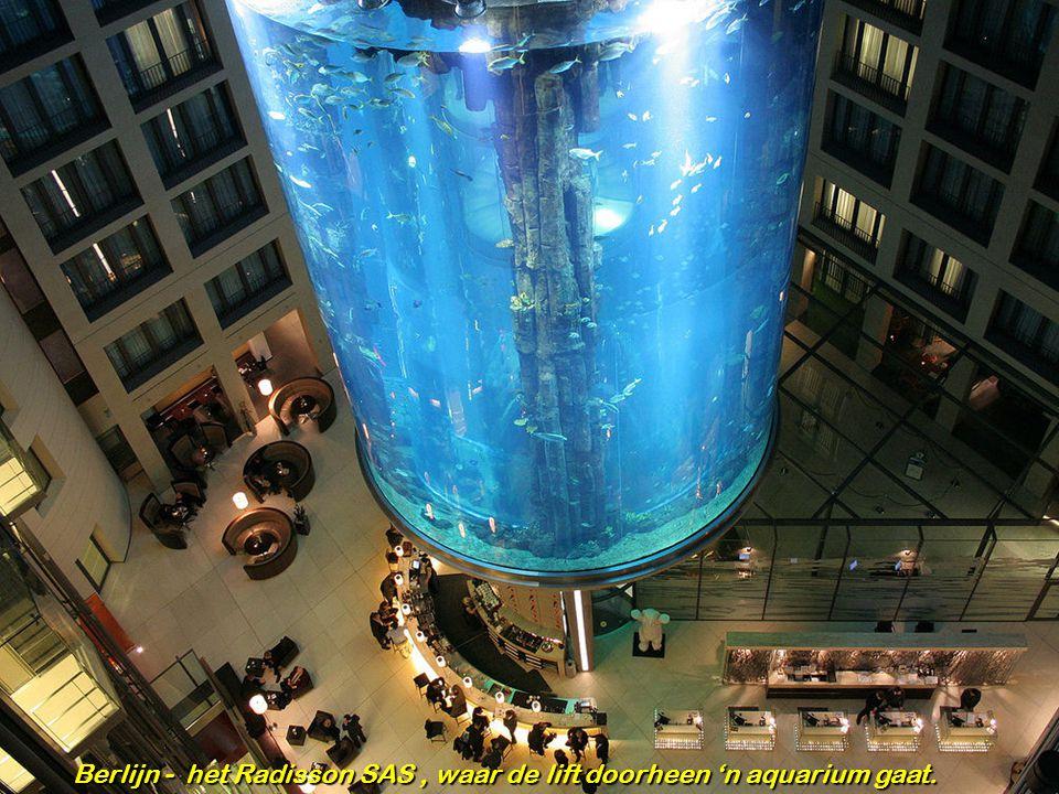 Berlijn - het Radisson SAS , waar de lift doorheen 'n aquarium gaat.