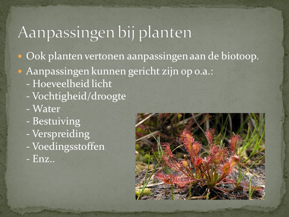 Aanpassingen bij planten