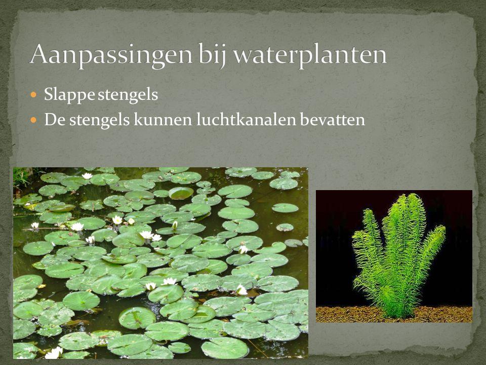 Aanpassingen bij waterplanten