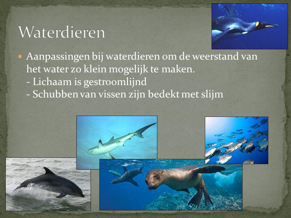 Waterdieren