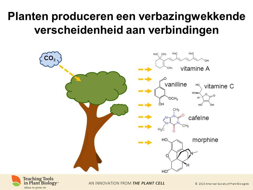 Planten produceren een verbazingwekkende verscheidenheid aan verbindingen