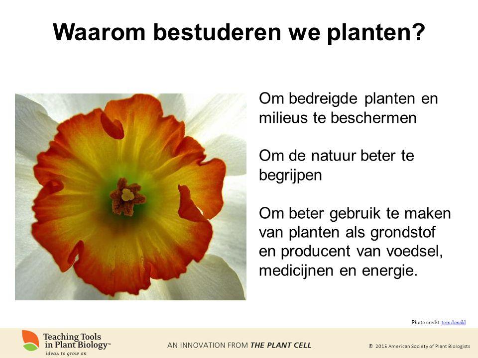 Waarom bestuderen we planten