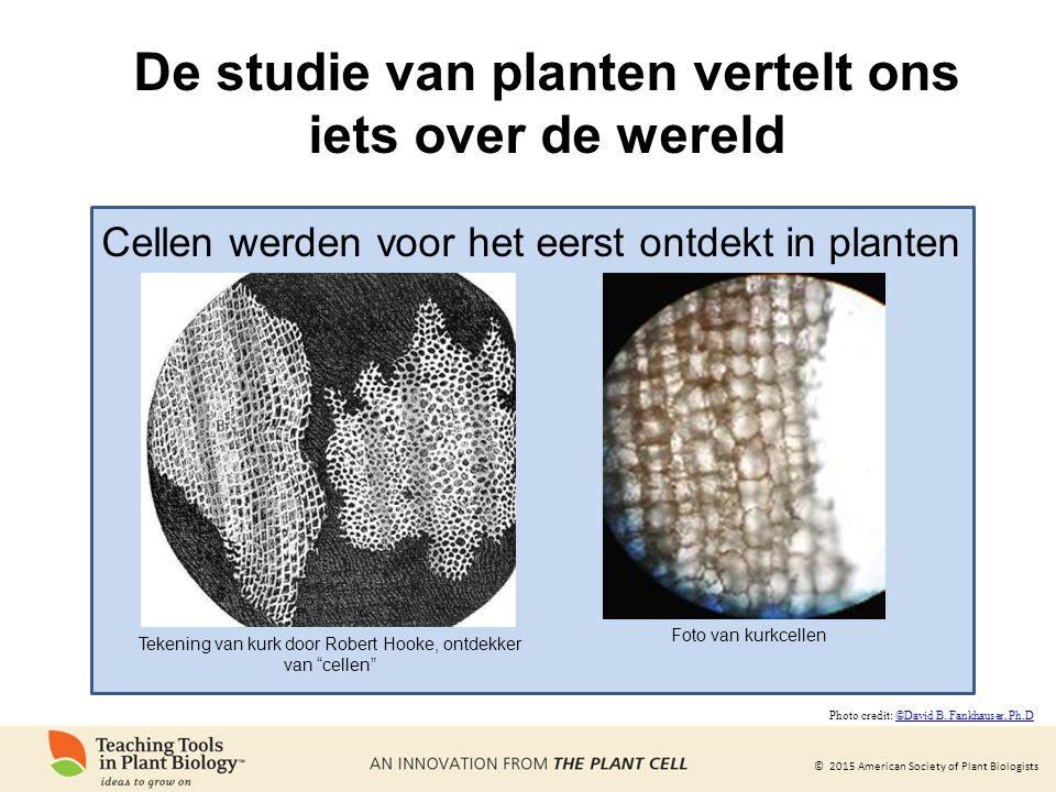 De studie van planten vertelt ons iets over de wereld