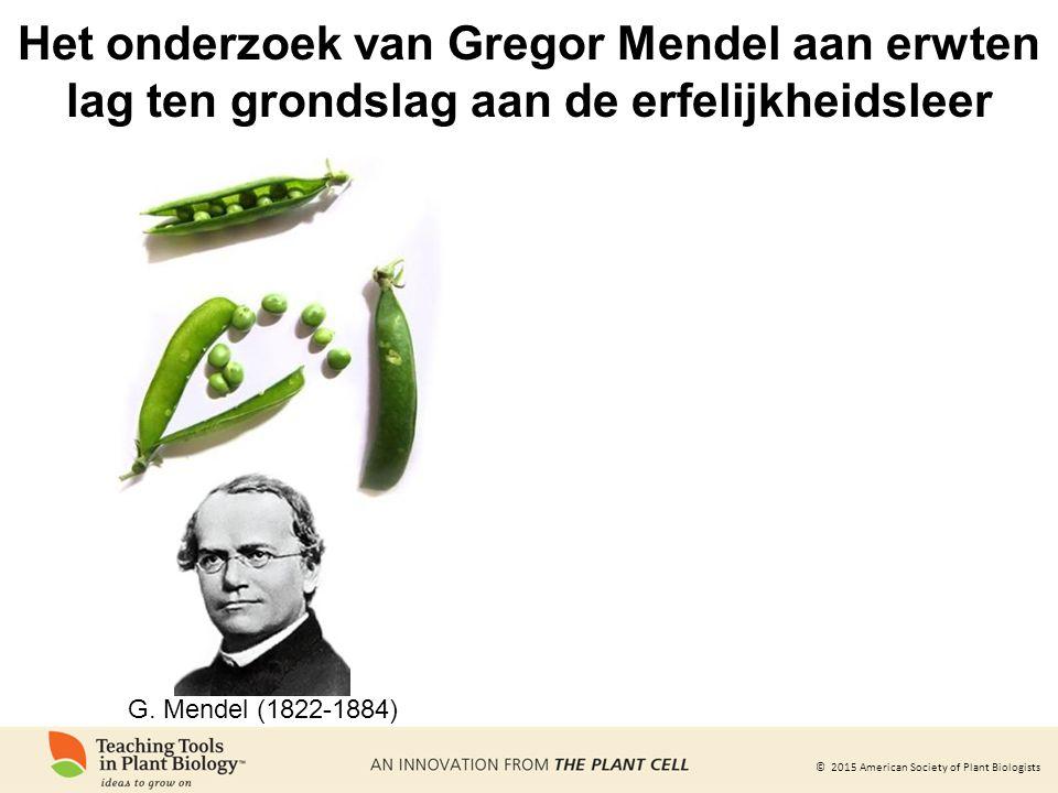 Het onderzoek van Gregor Mendel aan erwten lag ten grondslag aan de erfelijkheidsleer