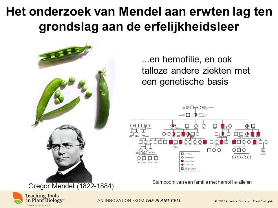 Het onderzoek van Mendel aan erwten lag ten grondslag aan de erfelijkheidsleer