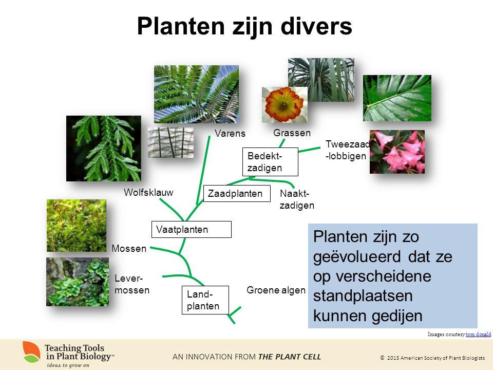 Planten zijn divers Groene algen. Lever- mossen. Mossen. Vaatplanten. Wolfsklauw. Varens. Zaadplanten.