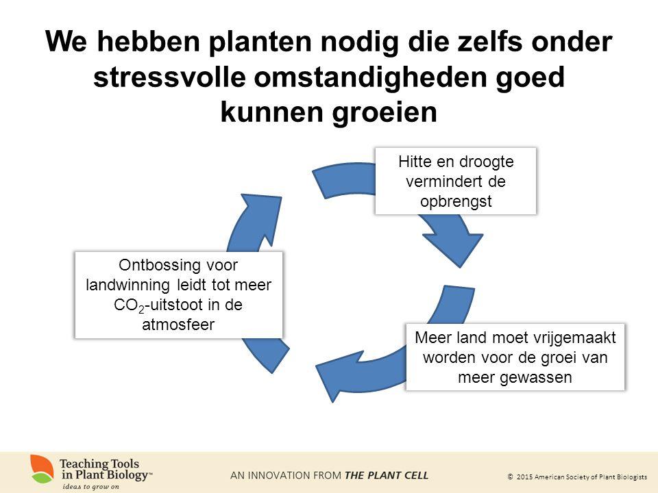 We hebben planten nodig die zelfs onder stressvolle omstandigheden goed kunnen groeien
