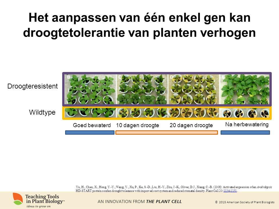 Het aanpassen van één enkel gen kan droogtetolerantie van planten verhogen