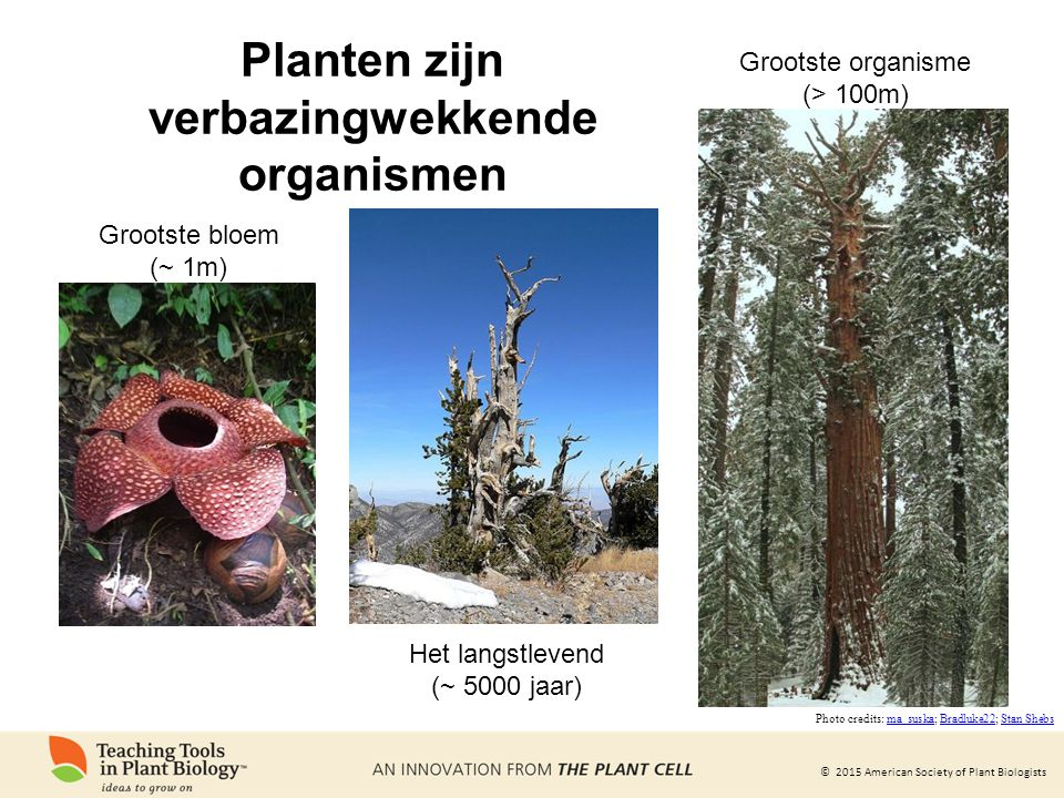 Planten zijn verbazingwekkende organismen