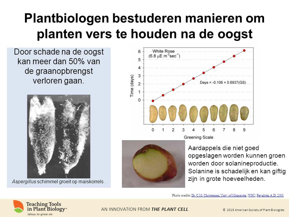 Plantbiologen bestuderen manieren om planten vers te houden na de oogst