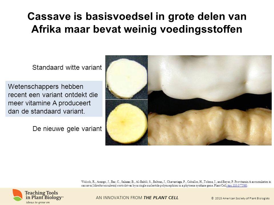 Cassave is basisvoedsel in grote delen van Afrika maar bevat weinig voedingsstoffen