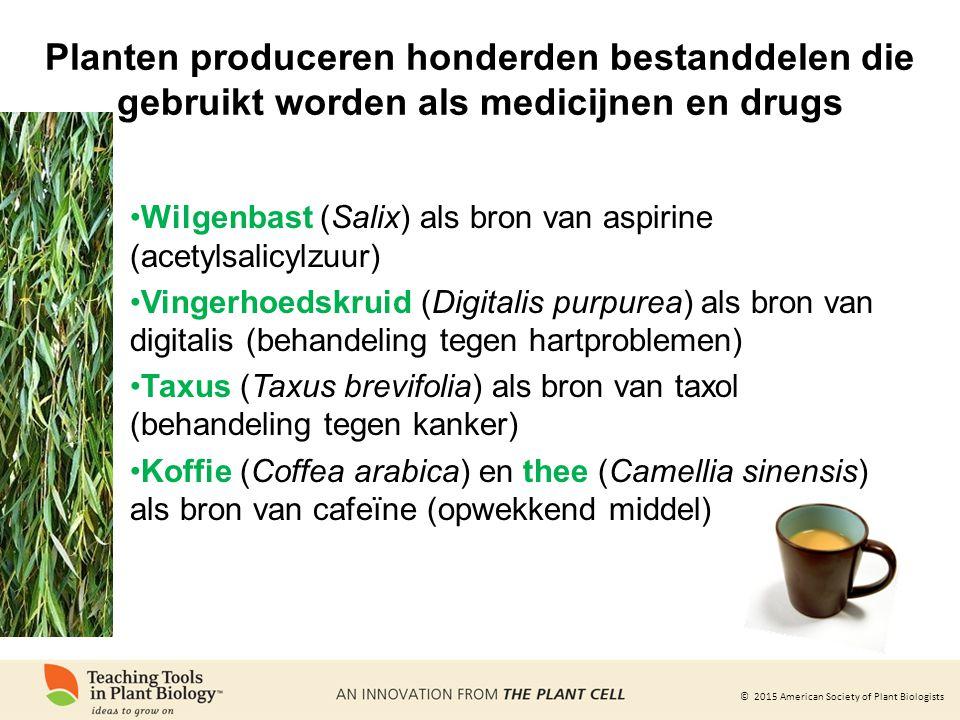 Planten produceren honderden bestanddelen die gebruikt worden als medicijnen en drugs