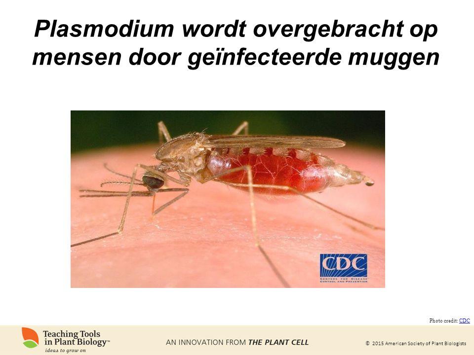 Plasmodium wordt overgebracht op mensen door geïnfecteerde muggen