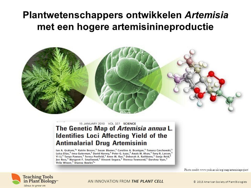 Plantwetenschappers ontwikkelen Artemisia met een hogere artemisinineproductie