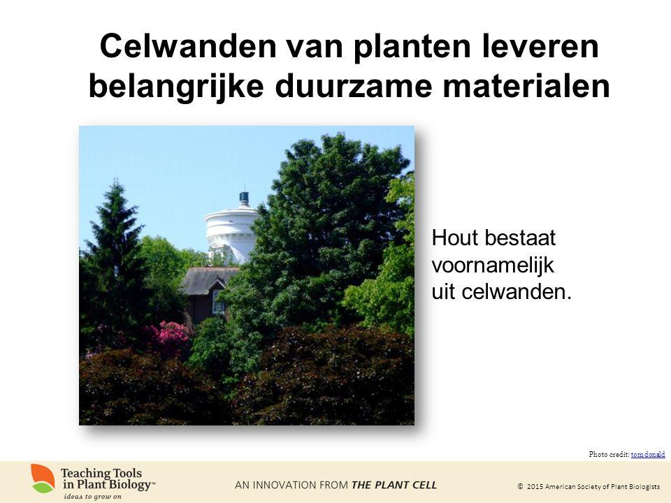 Celwanden van planten leveren belangrijke duurzame materialen