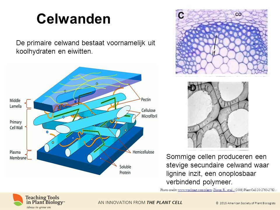 Celwanden De primaire celwand bestaat voornamelijk uit koolhydraten en eiwitten.