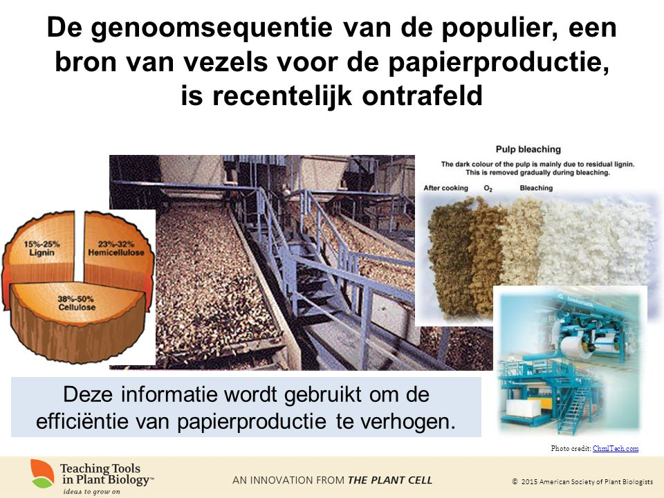 De genoomsequentie van de populier, een bron van vezels voor de papierproductie, is recentelijk ontrafeld