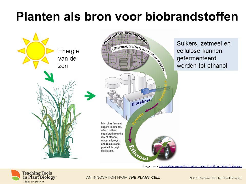 Planten als bron voor biobrandstoffen