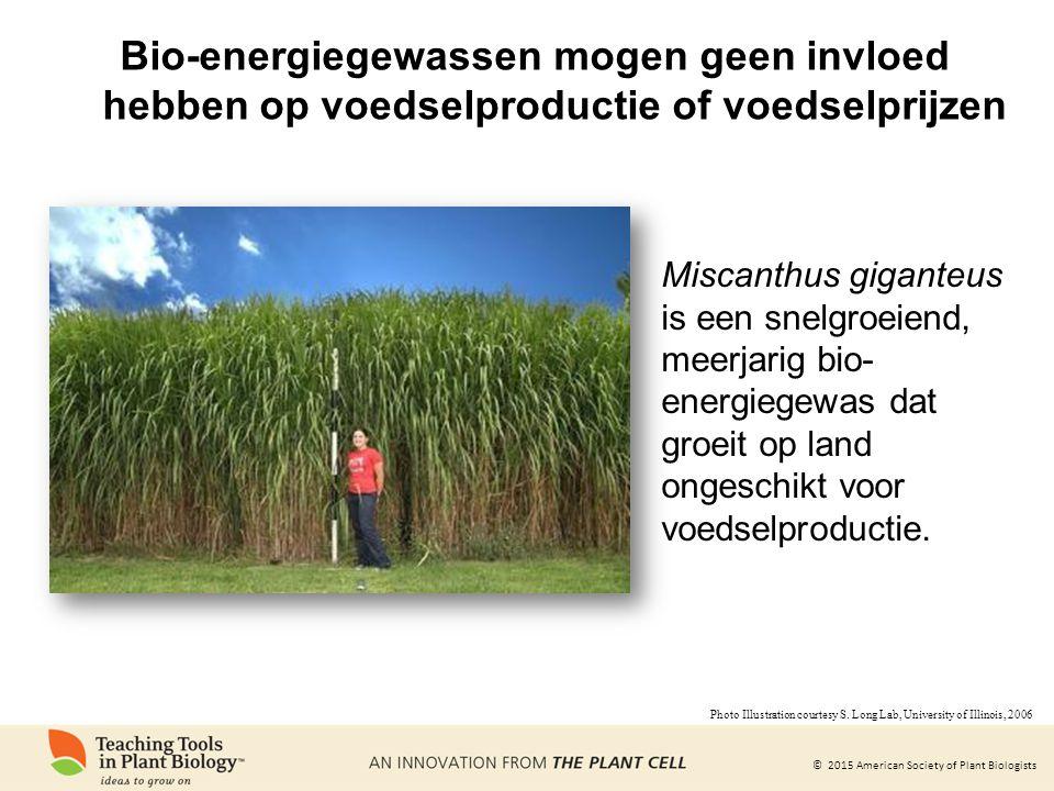 Bio-energiegewassen mogen geen invloed hebben op voedselproductie of voedselprijzen