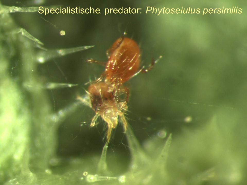 Specialistische predator: Phytoseiulus persimilis