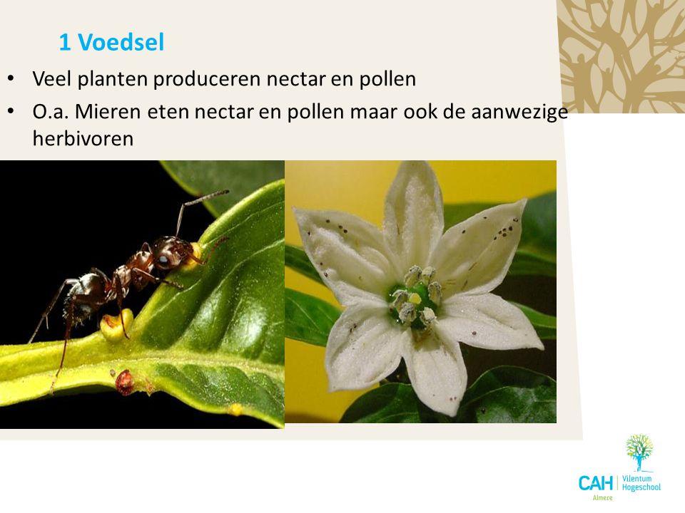 1 Voedsel Veel planten produceren nectar en pollen