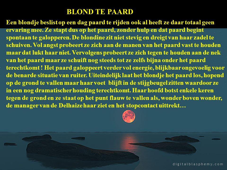BLOND TE PAARD
