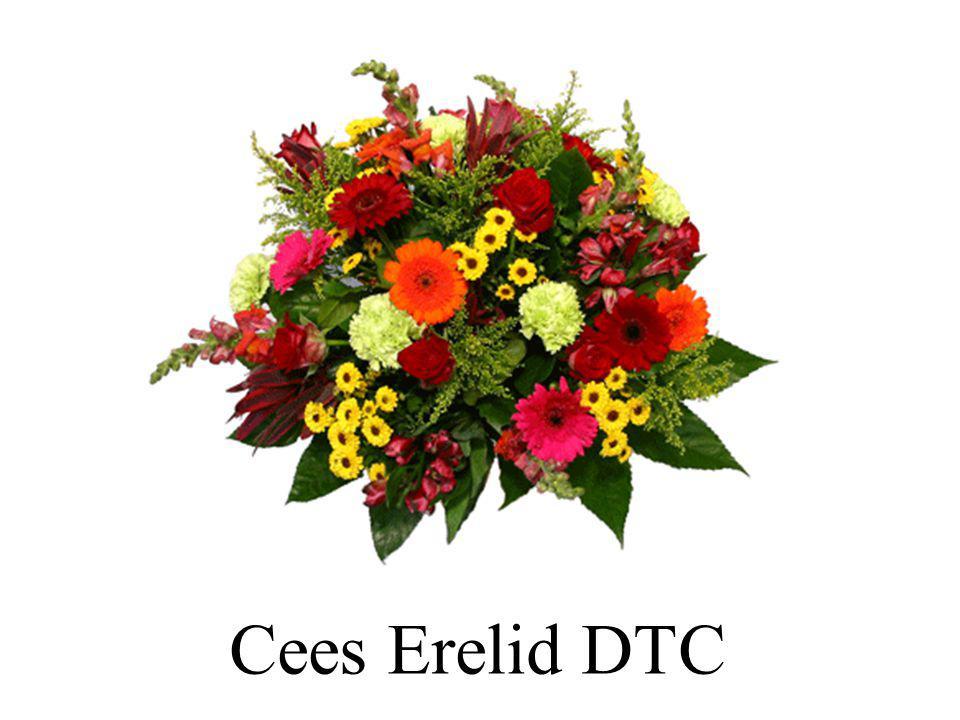 Cees Erelid DTC 24