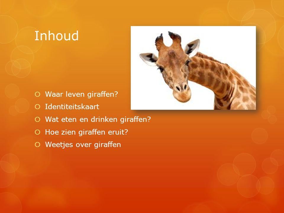 Inhoud Waar leven giraffen Identiteitskaart