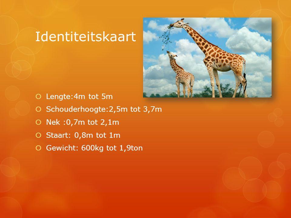 Identiteitskaart Lengte:4m tot 5m Schouderhoogte:2,5m tot 3,7m