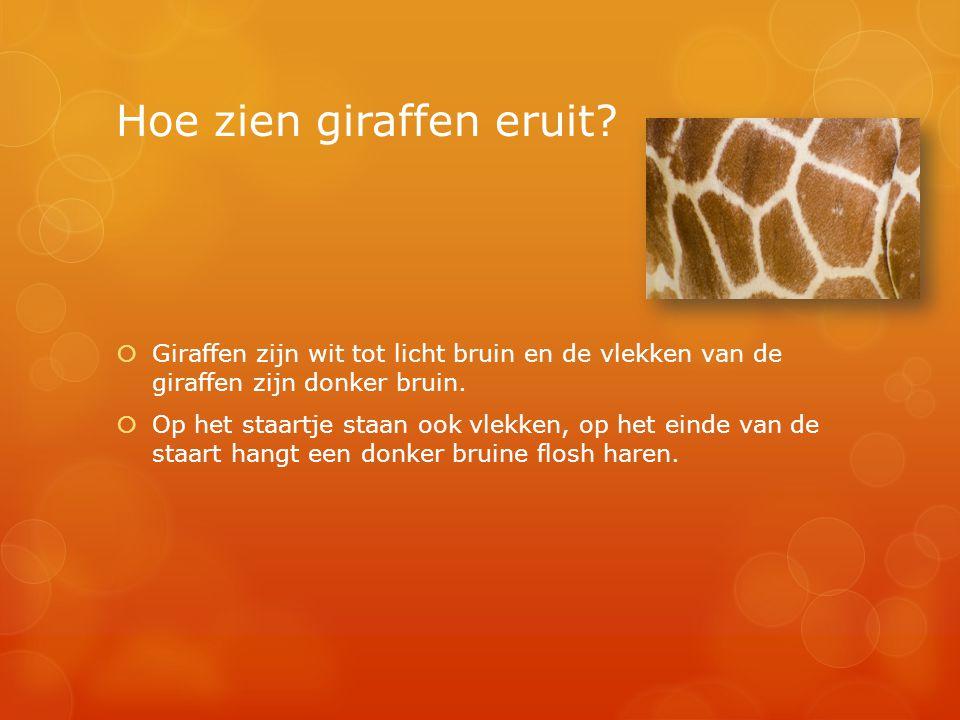 Hoe zien giraffen eruit