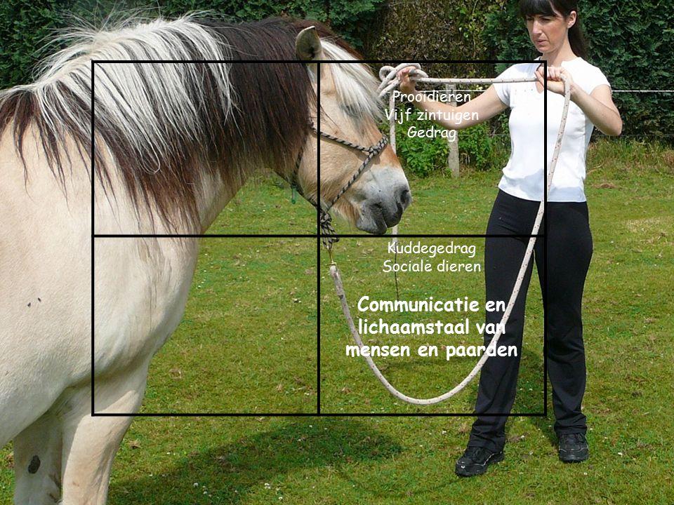 Communicatie en lichaamstaal van mensen en paarden