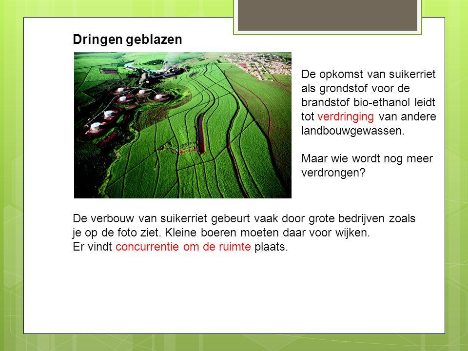 Dringen geblazen De opkomst van suikerriet als grondstof voor de brandstof bio-ethanol leidt tot verdringing van andere landbouwgewassen.
