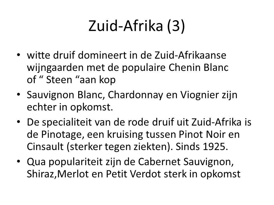 Zuid-Afrika (3) witte druif domineert in de Zuid-Afrikaanse wijngaarden met de populaire Chenin Blanc of Steen aan kop.