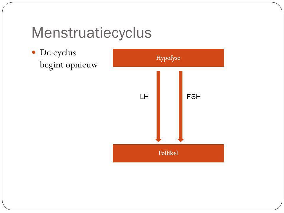 Menstruatiecyclus De cyclus begint opnieuw Hypofyse LH FSH Follikel