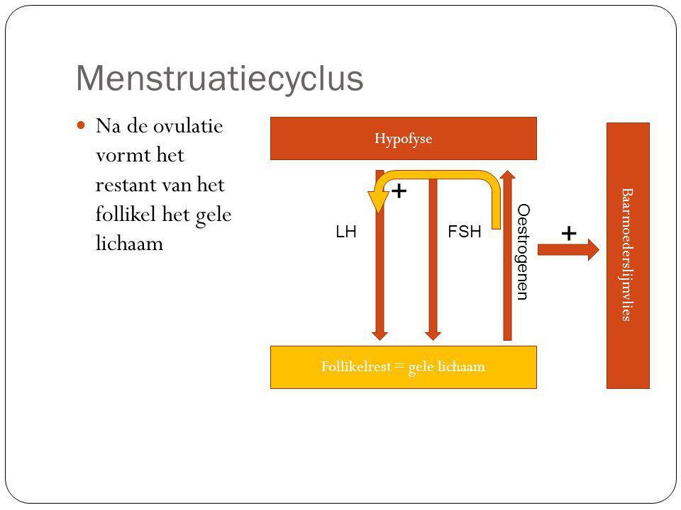 Menstruatiecyclus Na de ovulatie vormt het restant van het follikel het gele lichaam. Hypofyse.